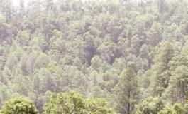 Sistema satelital permitirá detectar la deforestación
