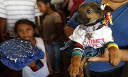 Católicos agradecen a San Lázaro por sanar a sus mascotas en Nicaragua