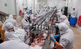Confirman directivos avícolas: Dos empresas están preparadas para exportar pollo a EEUU
