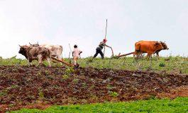 Reconoce la SAG: No todos los productores acatan las recomendaciones de siembra