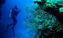 Isla de Roatán será sede de campeonato mundial de buceo