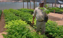 Reforestarán unas 30 mil hectáreas