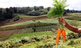 La zanahoria y sus beneficios