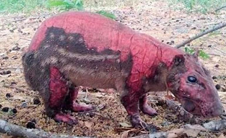 Incendios forestales arrasa con la flora y fauna, destruye la biodiversidad y el hábitat de muchos animales