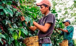 Alivio sector café solo abarca deudas con entes supervisados