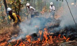 Unos 650 incendios registra ICF