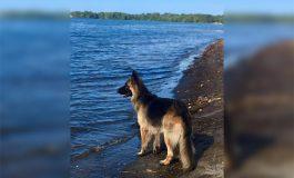 El emotivo reencuentro de Kiara, una perrita perdida en Omoa (Video)