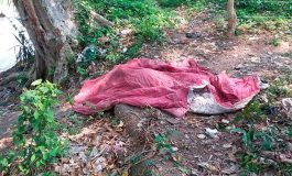 Encuentran cadáver de mujer sin cabeza y desnuda en El Junquillo, Santa Bárbara
