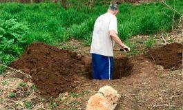¡Triste historia! Un perro mira cómo cavan su tumba, pero error de veterinario cambio su destino