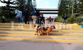 UNAH inicia operativos caninos antidrogas en campus de Tegucigalpa (Video)