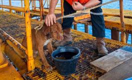 Rescatan a perro que se alejó 220 km nadando desde Tailandia