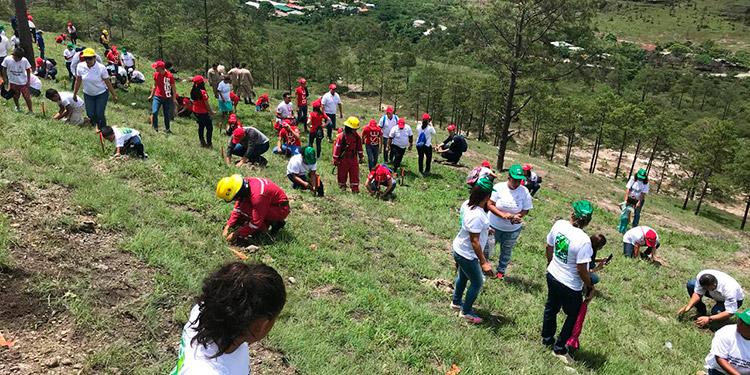 Se espera que más voluntarios participen en las jornadas de reforestación a nivel nacional.