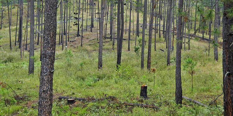 El 12 de diciembre de 2015, en Nueva York, Honduras suscribió la declaración de CO21, donde adoptó varios acuerdos ambientales, entre ellos la restauración de un millón de hectáreas de bosque.