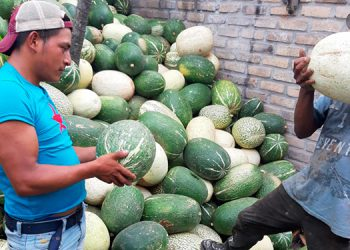 El productor Gil Gómez Domínguez, traslada diariamente 230 chiberros desde El Rodeo, Intibucá, hacia toda la zona central del país.