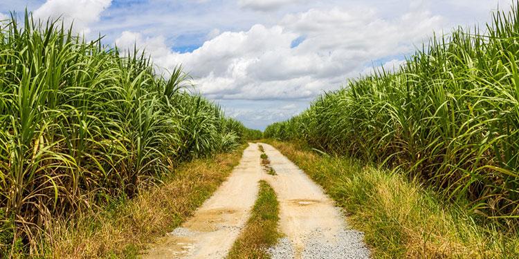 La industria de la caña de azúcar de Honduras está conformada por siete ingenios.