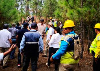 El ICF junto a 50 ONG, sociedad civil y población sensible al deterioro ambiental, buscan reforestar las zonas severamente dañadas por la tala ilegal, agricultura, ganadería, incendios y plagas.