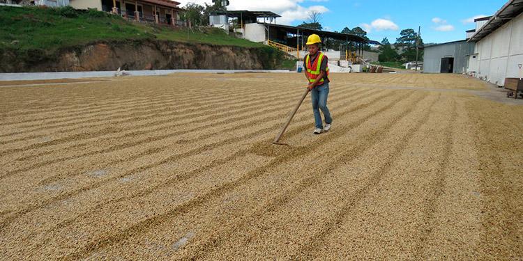 COMSA, inició como una caja rural, hoy día es una empresa modelo de café