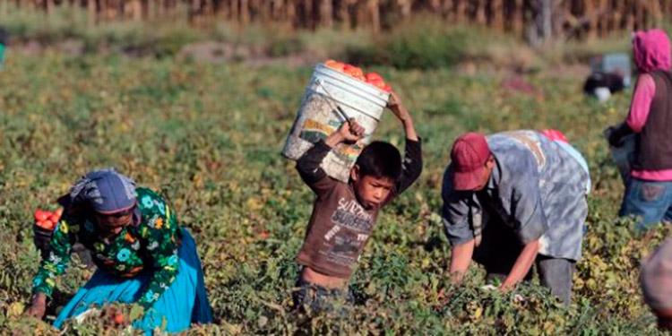 Cuando los padres no pueden obtener plazas laborales en los rubros donde solicitan, mandan a sus hijos con el fin de paliar la pobreza y tener el sustento diario, según testimonios.