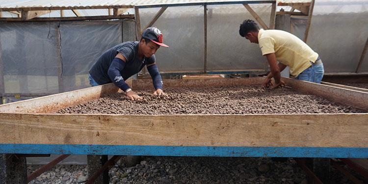 El acuerdo ayuda a que el cacao hondureño se posicione en el mercado internacional.