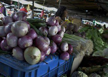En la Feria del Artesano y el Agricultor se comercializa a 25 lempiras el mazo de cebolla.