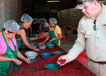 El ministro Mauricio Guevara, comprueba la calidad de la semilla de frijol cuarenteño.