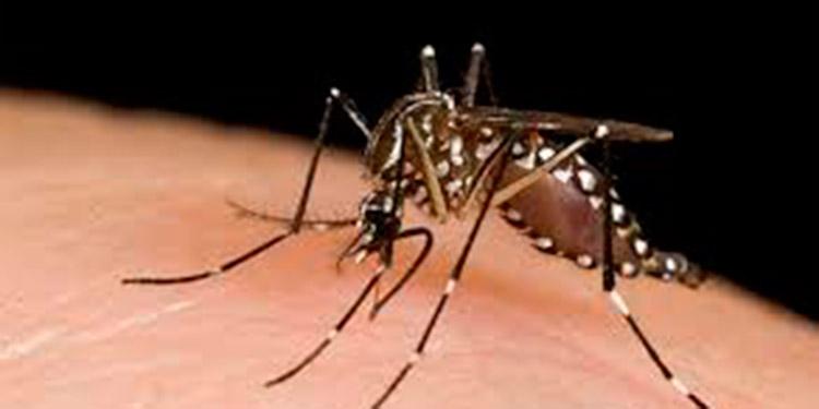 La enfermedad inflama el cerebro y es trasmitida por el mosquito, que también pasa el dengue.