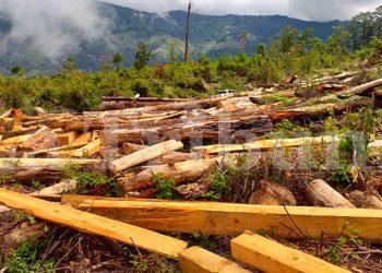 La madera decomisada sirve como prueba durante los juicios y posteriormente es utilizada para la construcción de bienes del Estado.