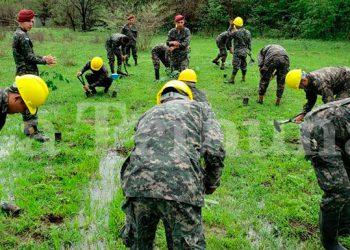 El C9 cuenta con cerca de 3,000 uniformados dedicados a las actividades en favor del medio ambiente, incluidas las reforestaciones.