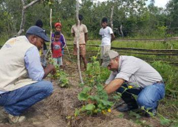 Estas tecnologías son semilla de frijol de las variedades Amadeus 77, Deorho y Honduras Nutritivo, de arroz Dicta Comayagua y de maíz Guayape.