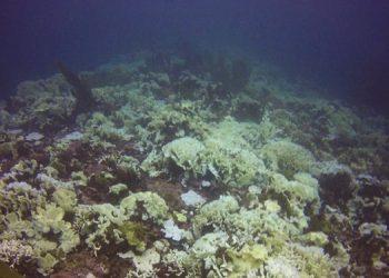 Esta enfermedad se ha propagado durante 2019 en los arrecifes de Honduras.