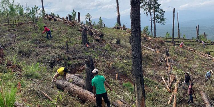 Para evitar los incendios forestales, los trabajadores limpian las zonas donde hay material que sirve como combustible.