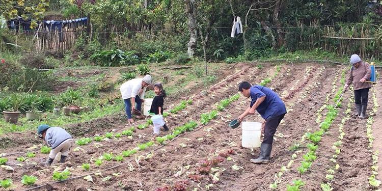 Alrededor de 6,820 millones de lempiras ejecutará Invest-H en proyectos agrícolas en el corredor seco.