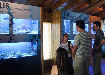 Las distintas especies de organismos acuáticos que exhibe el acuario de Tela Marine atrae la atención tanto del público en general como de científicos locales. Fotos: Josué Quintana Gómez