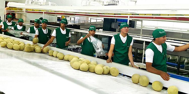 La industria melonera pasó la segunda inspección realizada en noviembre por una Comisión Técnica de la Oficina de Inspección de los Animales y las Plantas (Baphiq) de Taiwán.
