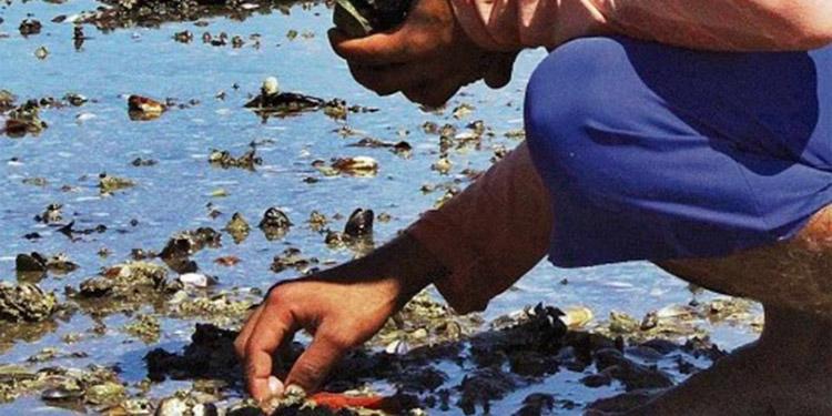La semana pasada se reportó la muerte de moluscos en La Unión, El Salvador, que comparte aguas del Golfo de Fonseca.