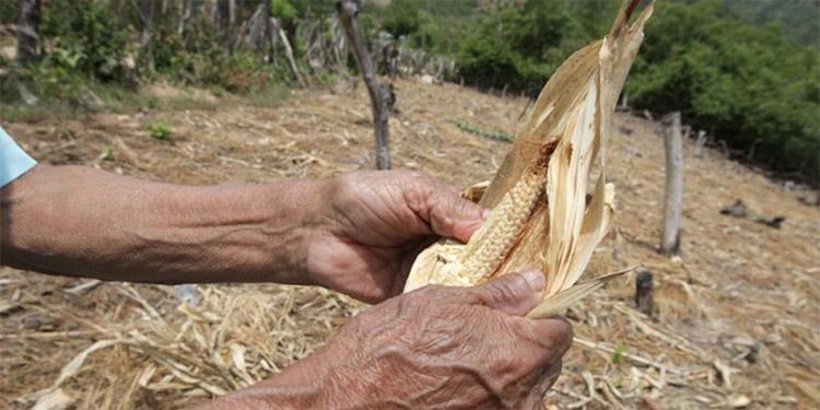 FAO y el PMA: La desnutrición aguda se disparará en más de 20 países, entre ellos Honduras