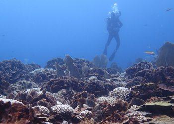 La bahía de Tela, norte Honduras, es uno de los sitios con más cobertura de coral vivo del Arrecife Mesoamericano. Fotos: Tela Marine y Shawn Jackson