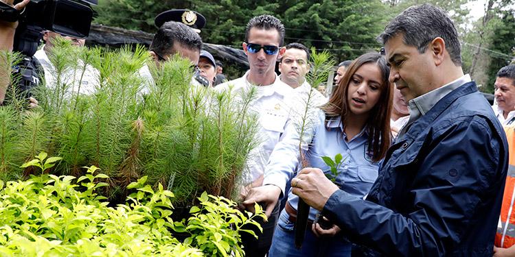 El Presidente Juan Orlando Hernández le ha apostado a la reforestación a través de distintos proyectos en todo el país.