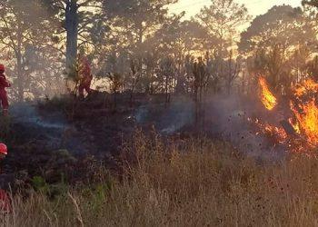 Honduras pierde entre 60,000 y 70,000 hectáreas de bosques por la tala ilegal y los incendios forestales.