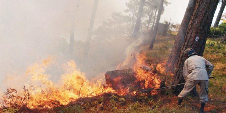 La mayoría de los incendios forestales se han presentado en el Distrito Central y Gracias a Dios.