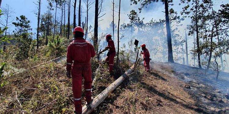 Pirómanos no miden conciencias de quemar los bosques, lamentan bomberos de Honduras