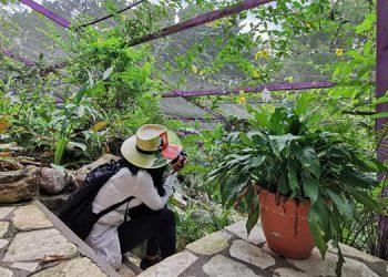 Promueven observación de aves, sin romper cuarentena por COVID-19 en Honduras (Fotos)