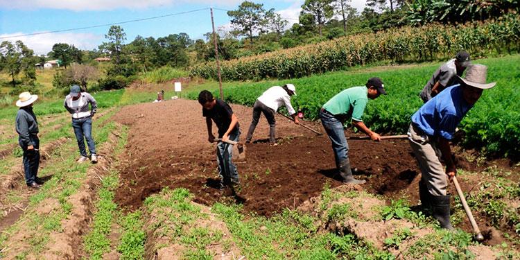 A todos los grupos de productores agropecuarios se les aplica un procedimiento estándar acompañado de documentos como personería jurídica, número de integrantes y ubicación, entre otros.