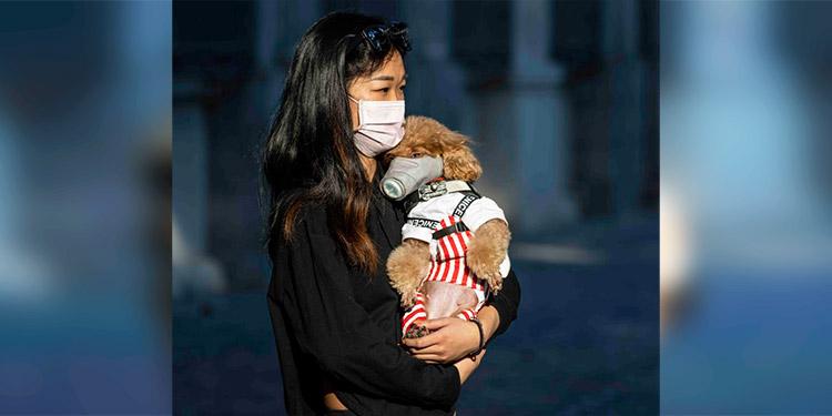 La OIE confirma el caso de un perro en Hong Kong con coronavirus