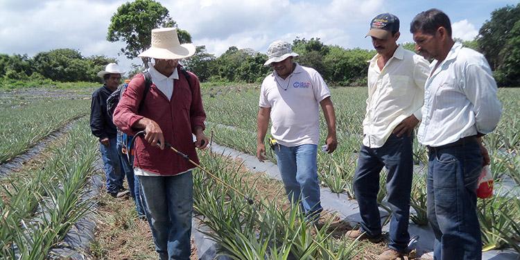 Al menos 13 organizaciones de productores agrícolas coinciden en que debe haber un banco de desarrollo.