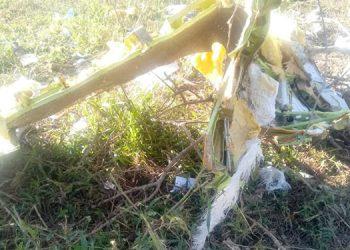 """La avioneta se estrelló cuando intentaba aterrizar en una """"narcopista"""" del sector de Iriona, Colón."""
