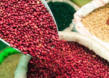 Gobierno prohíbe exportación de frijol rojo durante crisis sanitaria