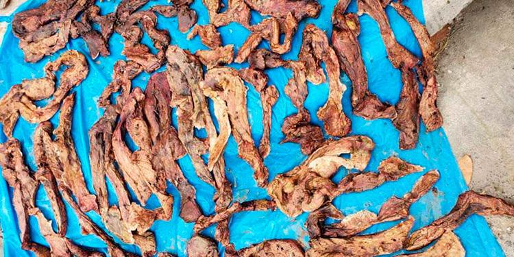 Incineran varias libras de carne descompuesta