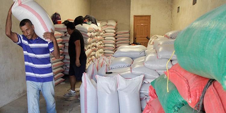 De los principales granos básicos, solo el cultivo de frijol registra excedentes para exportaciones.