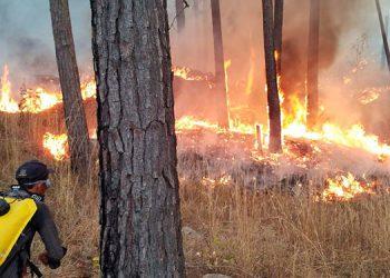 La mayoría de los incendios forestales son combatidos por los bomberos junto con las Fuerzas Armadas y voluntarios de las comunidades.